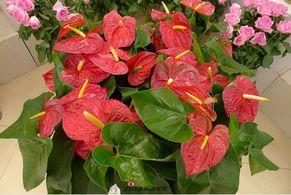 西安世园会国际组合盆栽植物展