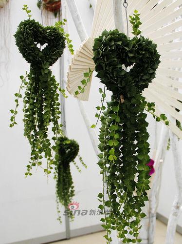 西安世园会国际垂吊植物花卉展览开幕