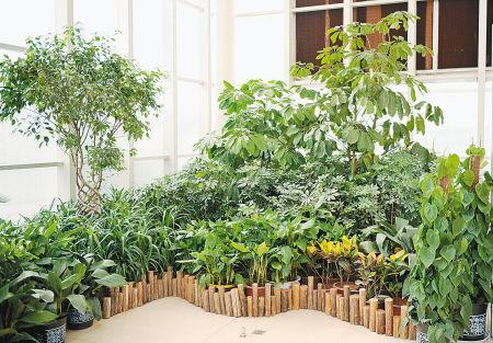 花卉展還讓綠色環保家具與室內觀葉植物巧妙搭配,相互映襯,廣大游客在