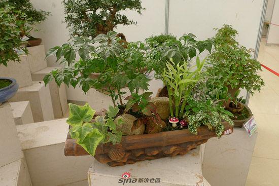 这里的组合盆栽植物展又缤纷开幕了